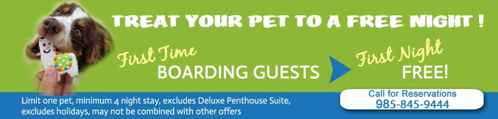 Free Night of Dog Boarding